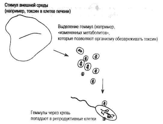 Теория пангенезиса Чарльза