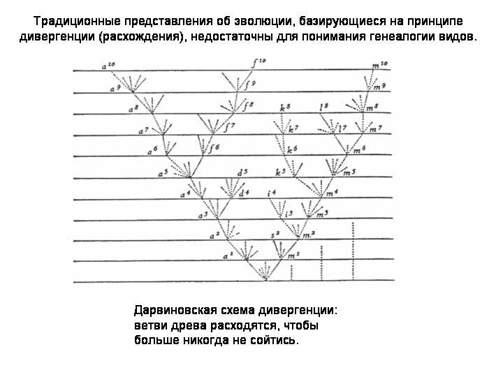 прокариот и эукариот