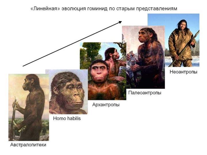 Занимались ли мы сексом с неандертальцами (тайны первых людей)