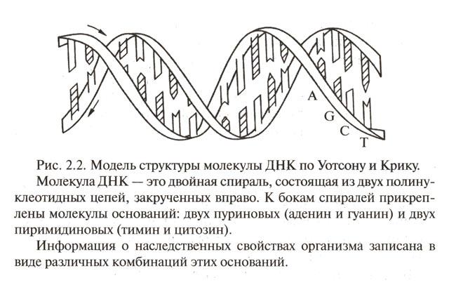 В сперматазоидах одинаковая информация или разная